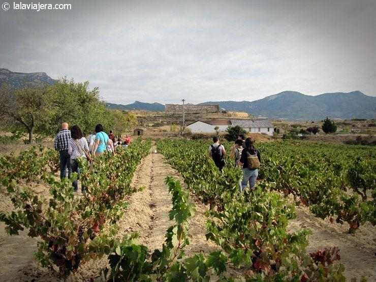 Vendimia en familia en Rioja Alavesa