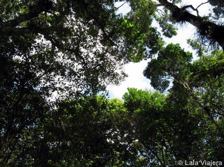Vegetación selvatica Reserva Biosfera Calakmul