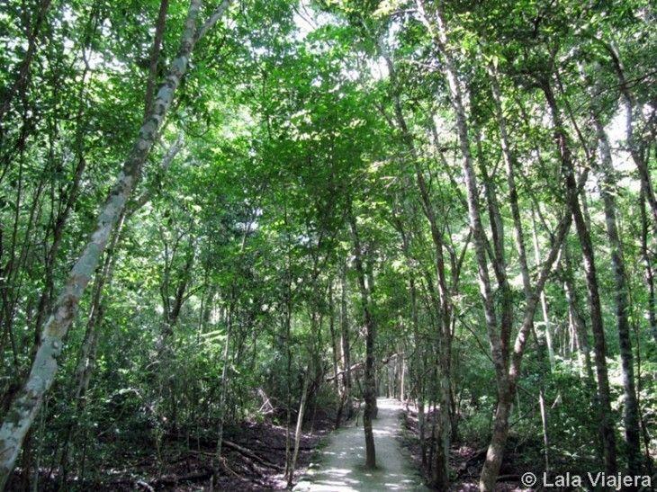 Calakmul, Reserva de la Biosfera