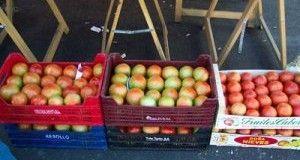 Feria del Tomate (Mansilla de las Mulas, León)