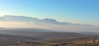 Oleoturismo en Jaén: un viaje a la cultura del olivo