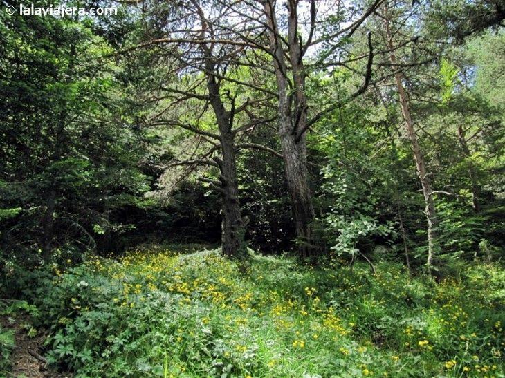 Bosque de Varicauba, Valle de Arán