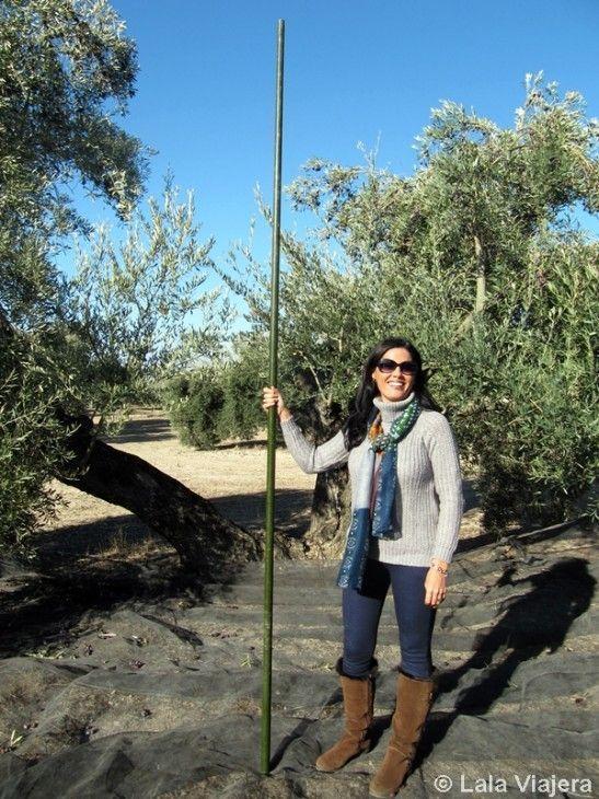 Aceitunera por un día, Oleoturismo en Jaén