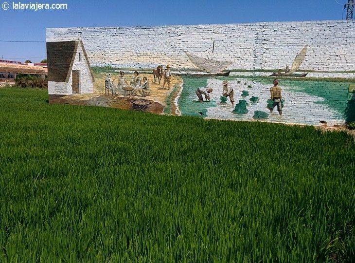 Cultivo de arroz en la Albufera