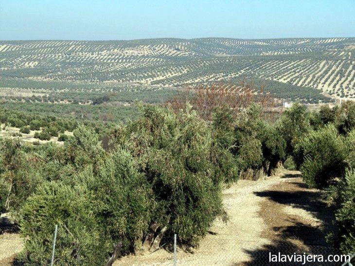 El mar de olivos de Jaén