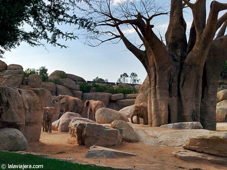 Recreación de la sabana africana en el Bioparc de Valencia