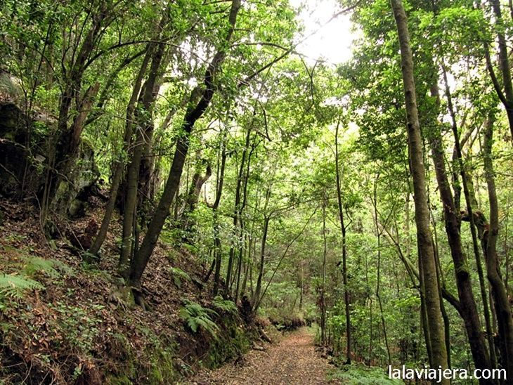 Rutas de senderismo en el Parque Nacional de Garajonay