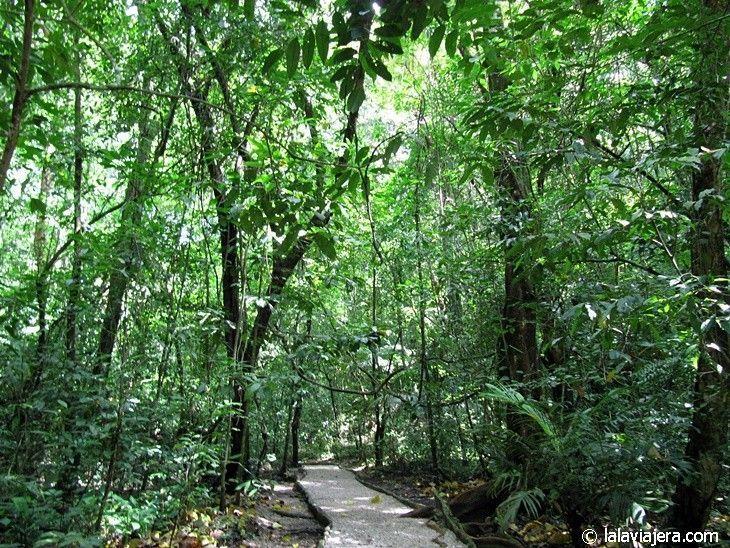 Ciudad maya de Palenque inmersa en la Selva Lacandona