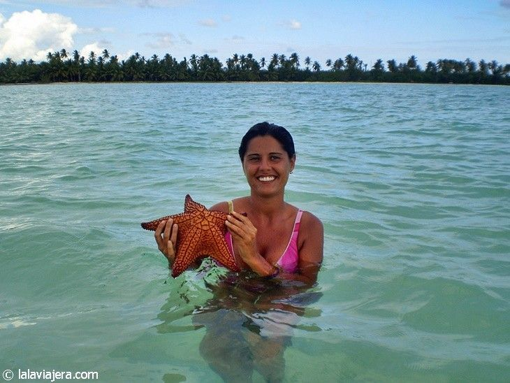 Estrellas de mar al alcance de tu mano en Isla Saona
