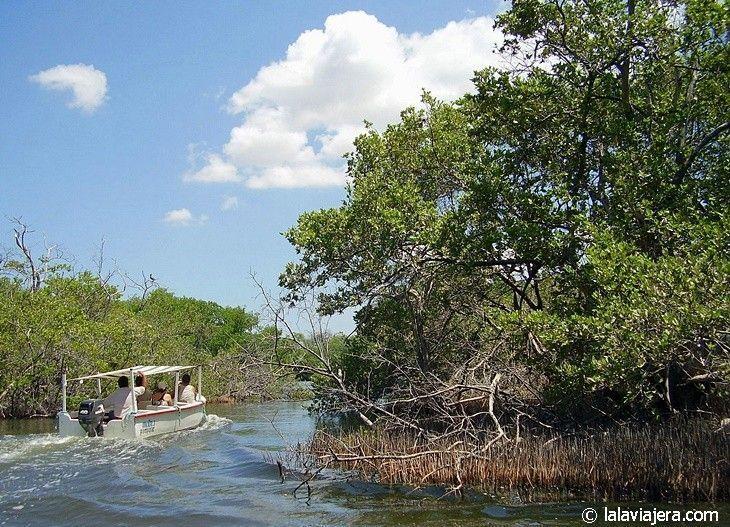 Navegando entre manglares por la Laguna La Restinga, Isla Margarita