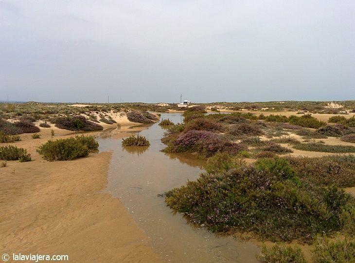 Dunas y Ría Formosa en Isla Culatra, Algarve