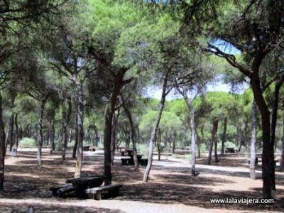Areas Recreativas Pinares Parque Litoral, Isla Cristina, Huelva