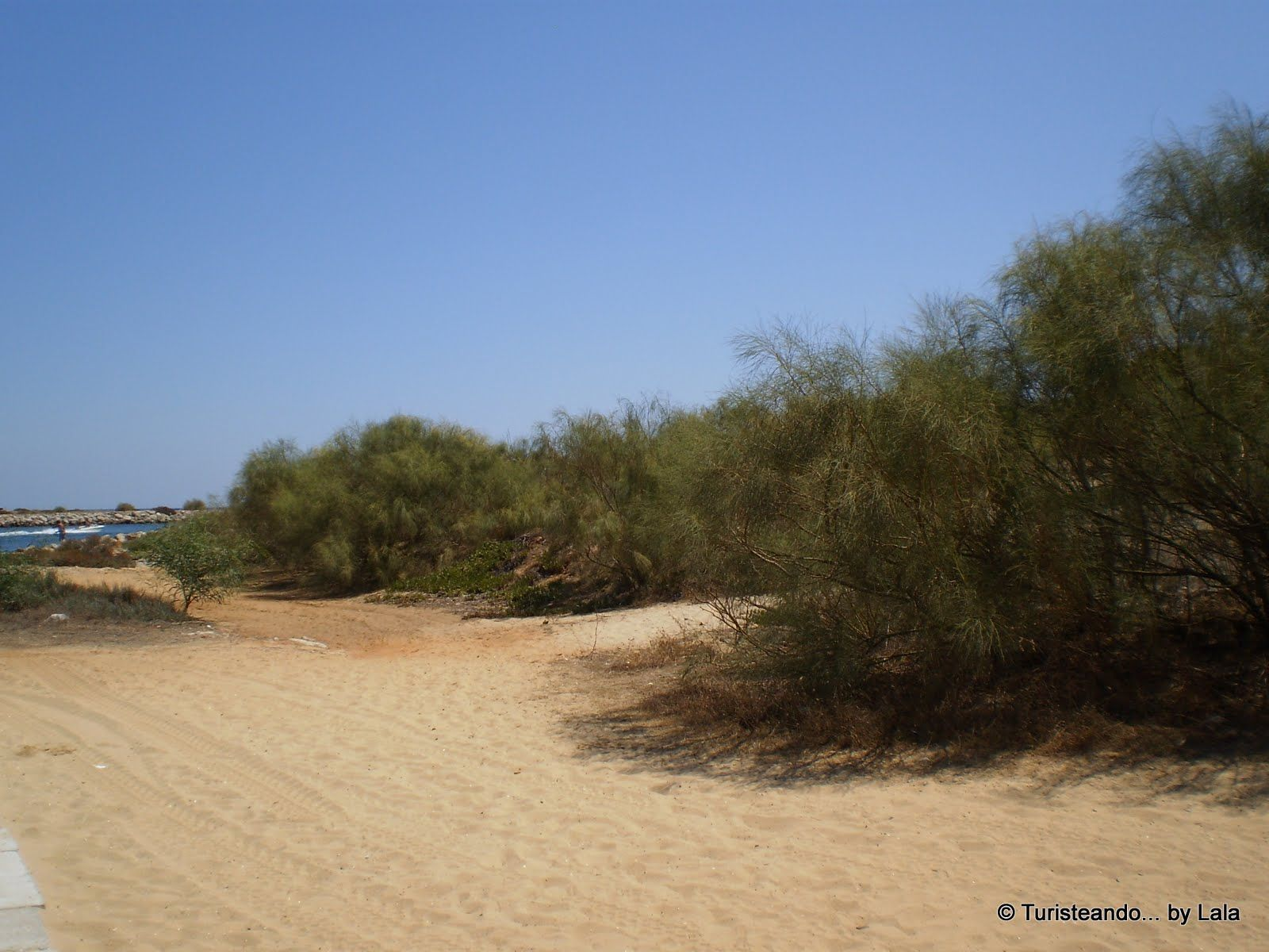 parque natural ria formosa dunas