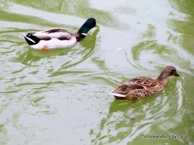 fauna riberas rio guadaira