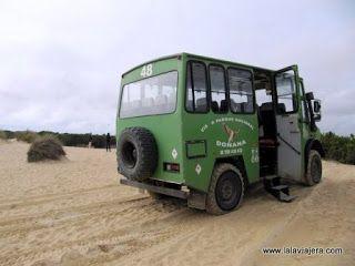 Excursion 4x4 Parque Nacional Donana
