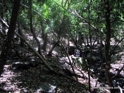Loreras, bosque laurisilva