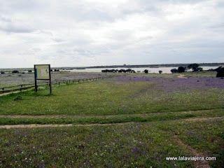 Laguna Dehesa de Abajo, Doñana