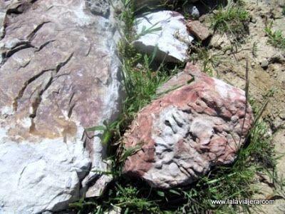 Fosiles Daedalus, Geoparque Villuercas