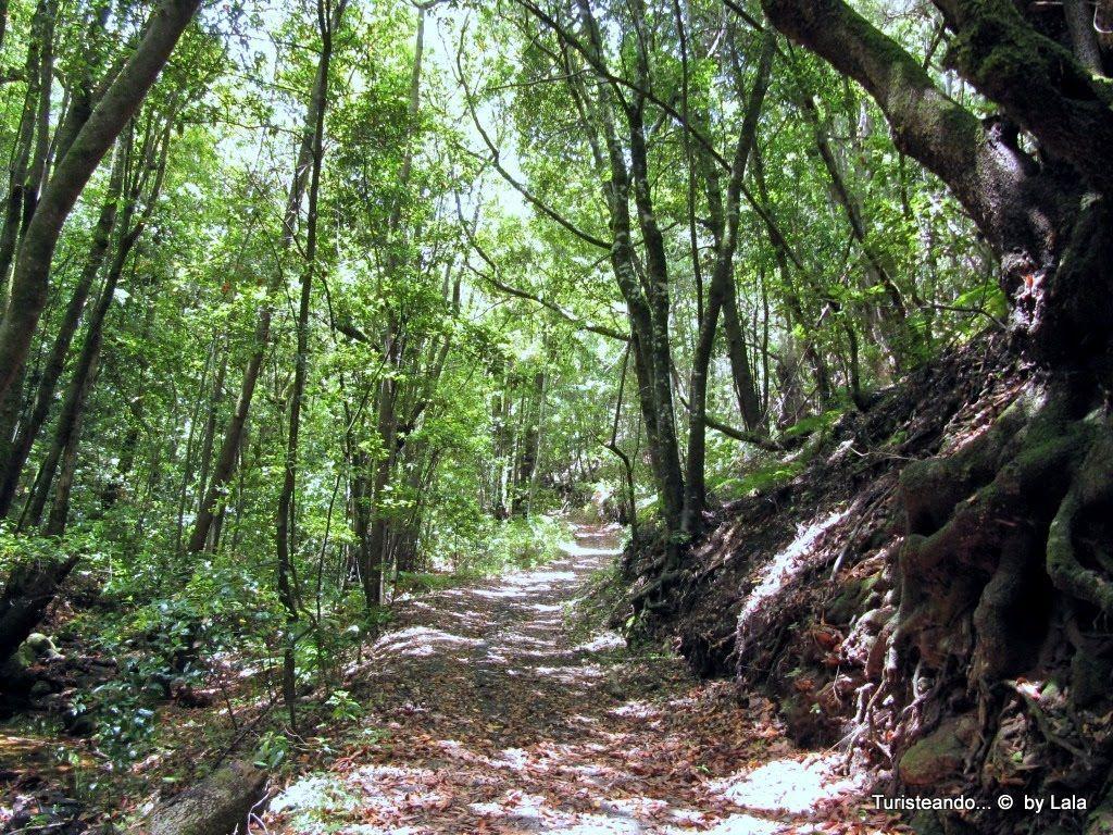 Indice minubetrip canarias 7 dias 7 islas lala viajera for Piscinas naturales hermigua