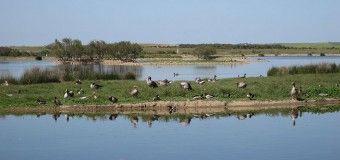 Birding en las Lagunas de Villafáfila