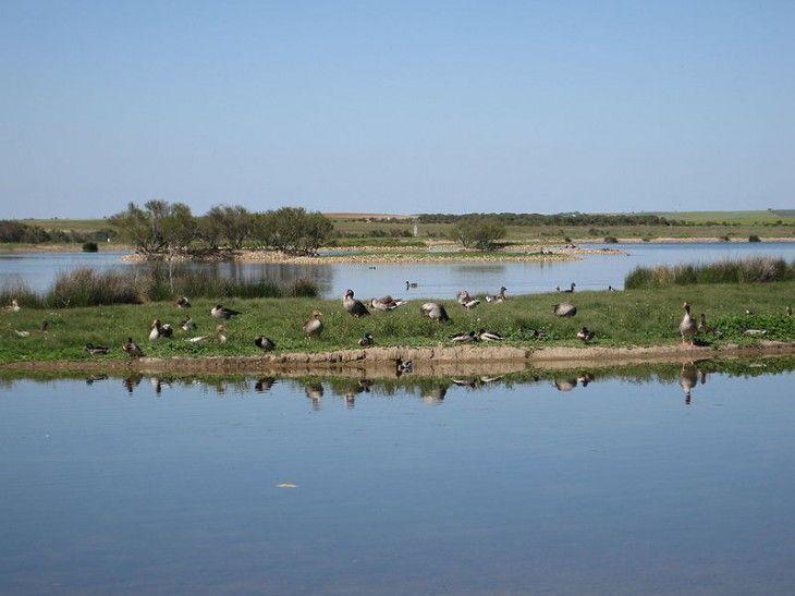 Reserva Natural de las Lagunas de Villafáfila, Zamora