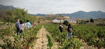 Vendimia en familia, toda una experiencia en Rioja Alavesa