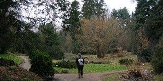Arboretum Simeria (Rumanía)