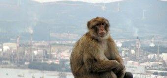 Excursión de un día a Gibraltar