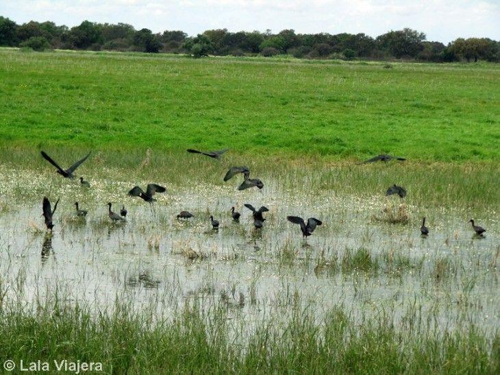 Descubre Huelva: Marismas de Doñana