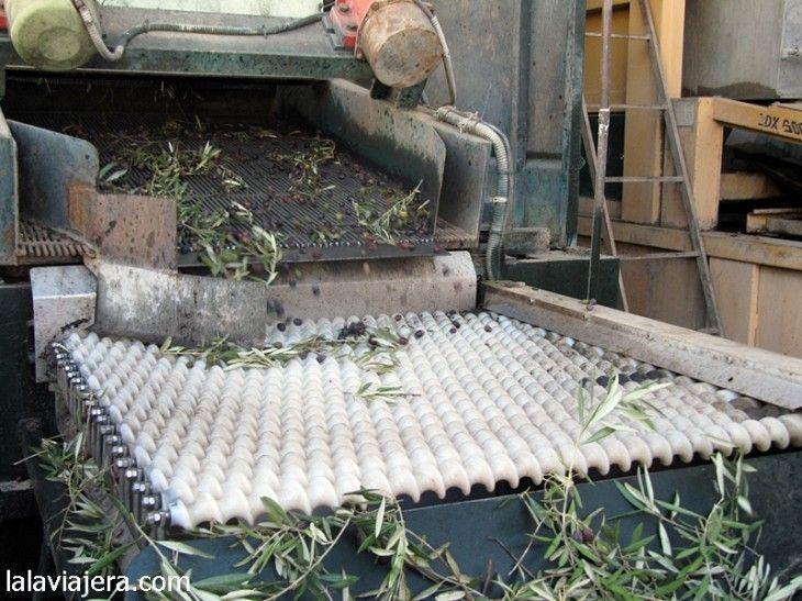 Haz tu propio aceite de oliva en Oleicola San Francisco