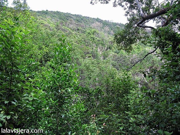 Garajonay, el parque nacional de la laurisilva