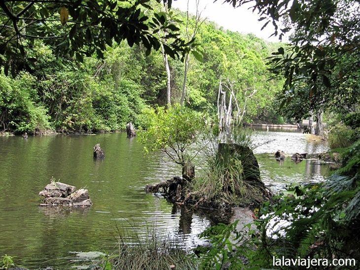 Bosque de laurisilva rodeando la presa de Meriga, Garajonay