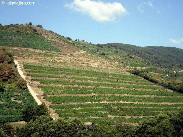 Bancales de viñedos en la Ribeira Sacra