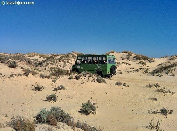 Descubre Huelva: Excursión a Doñana en 4x4