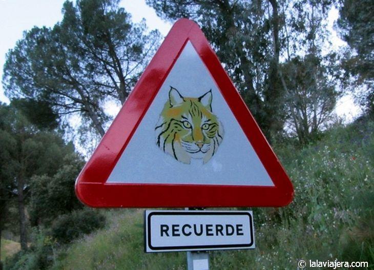 Lince ibérico en la Sierra de Andújar, Jaén