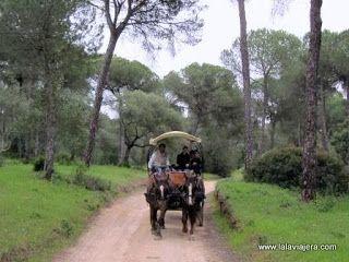 Doñana Coche Caballos