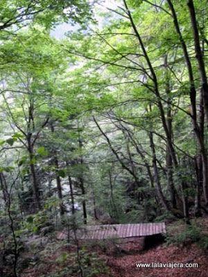 Hayedo Posets Maladeta, Ribagorza