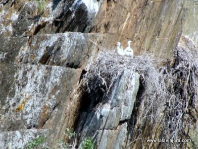 Ciguena Negra, Parque Natural Tajo Internacional