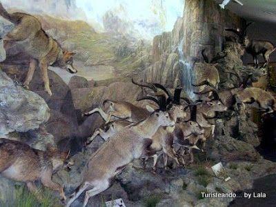 museo de la fauna salvaje, Valdehuesa Boñar